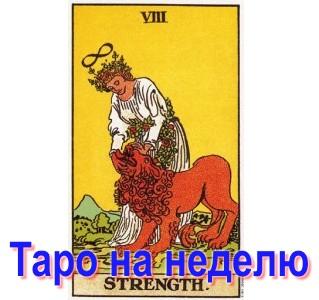 taro-nedelya